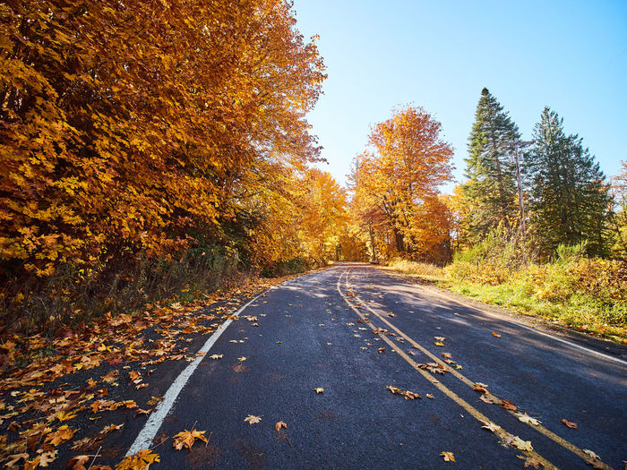 Asphalt Autumn Beauty In Nature Change Clear Sky Day Forest Leaf Nature No People Orange Color Outdoors Road Scenics Sky The Way Forward Tranquil Scene Tranquility Transportation Tree