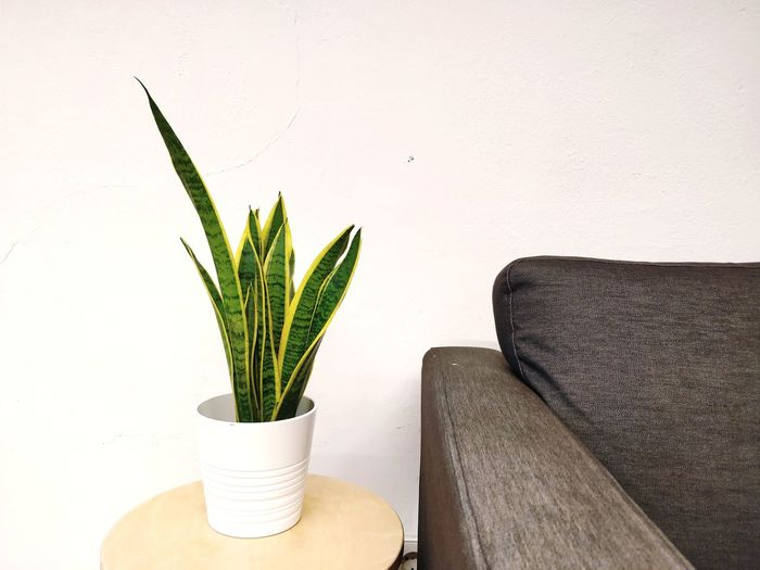 Office Startup Relaxing Relaxation Copy Space Waiting EyeEm Selects Potted Plant Plant Indoors  Home Interior Cactus Growth Vase Home Showcase Interior Flower Day Nature No People Living Room