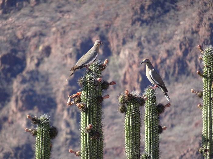 Birds perching on cactus