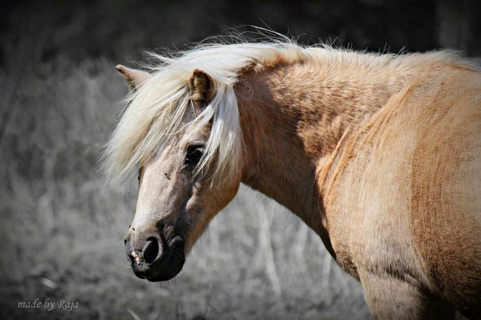 Horse Pferde EyeEm Animal Lover Colourkey