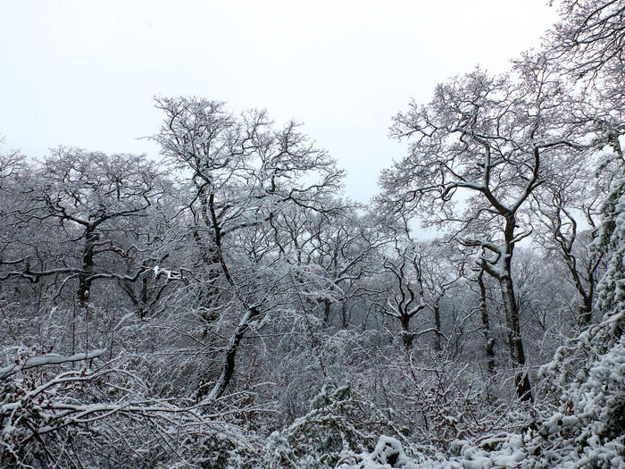 Bare Tree Beauty In Nature Branch Clear Sky Cold Temperature Day Forest Growth Landscape Nature No People North London Outdoors Park Queens Wood Scenics Sky Tranquility Tree Winter
