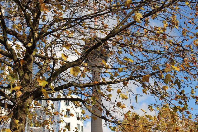 Tree Branch Low Angle View Growth Nature No People Beauty In Nature Day Outdoors Flower Backgrounds Freshness Sky Fragility Postcode Postcards Business Finance And Industry Hafen Düsseldorf 🌾 Medienhafen Düsseldorf 🌾 Gehry Buildings Gehry Bauten Low Angle View Gehry Herbst17 🦋
