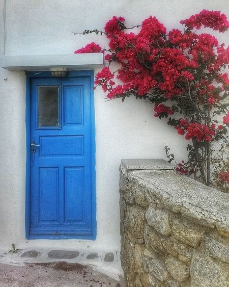 Mykonos Beautifulcolors Tipicalhouse Flowers Bluedoors Greek Style Greekhouse Holiday Relax