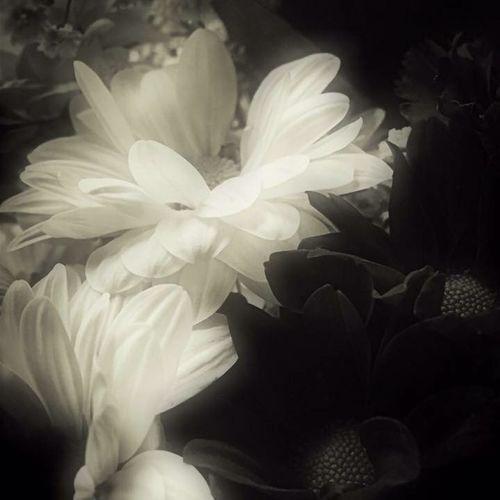 Prayers for Paris 💜 Blackandwhite Tadaa Community Darkness And Light Freedom Rememberance Black And White Photography IPhone Photography Black & White