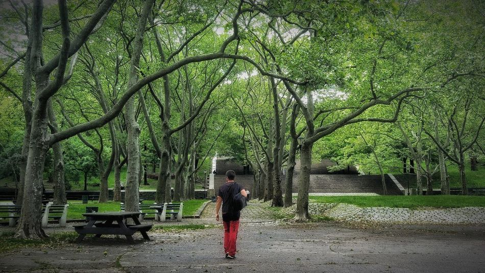 New York City Brooklyn Standing One Person Tree Real People Growth Walking Day