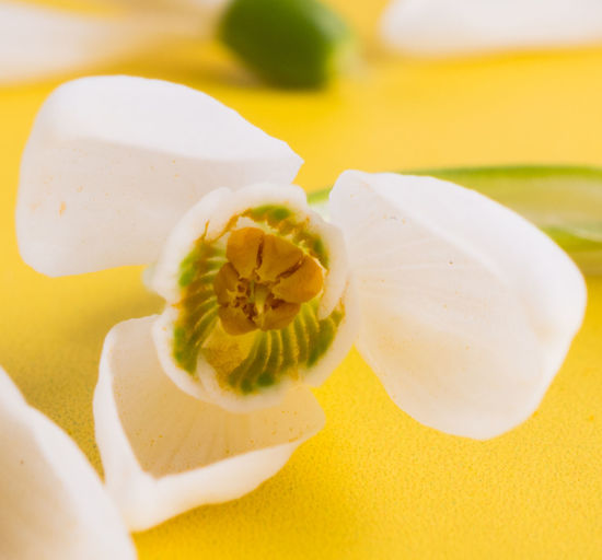 High angle view of white flower in plate on table