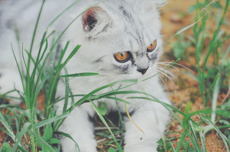 Cat looking away in field