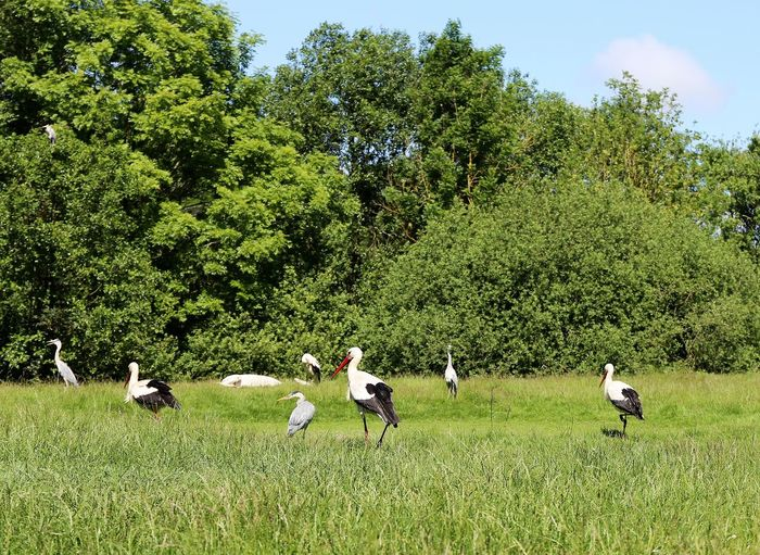 Störche und Reiher auf der Wiese Störche Wiese  Day Field Grass Green Color Growth Nature Outdoors Reiher Robbarium Storch Togetherness Tree Wildpark