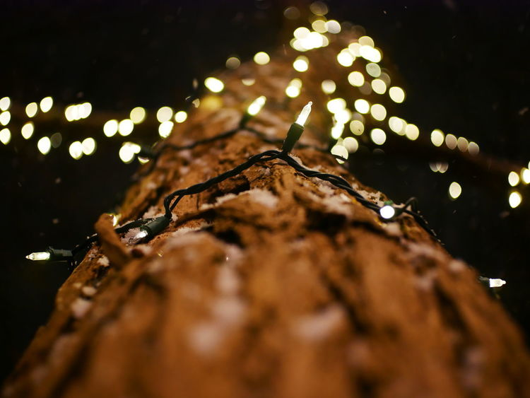Christmas Christmas Lights Tree Bark Blinky Lights Christmas Decoration Christmas Lights Tree Close-up Light Bulbs Light On Bark Light String Lights On Tree Night No People Outdoors Patterned Lights Selective Focus String Of Lights Tree Lights