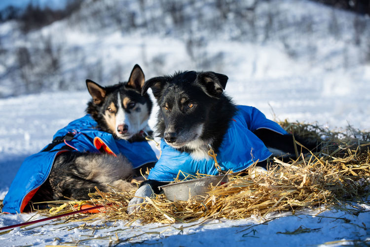 Two dogs on snow on land