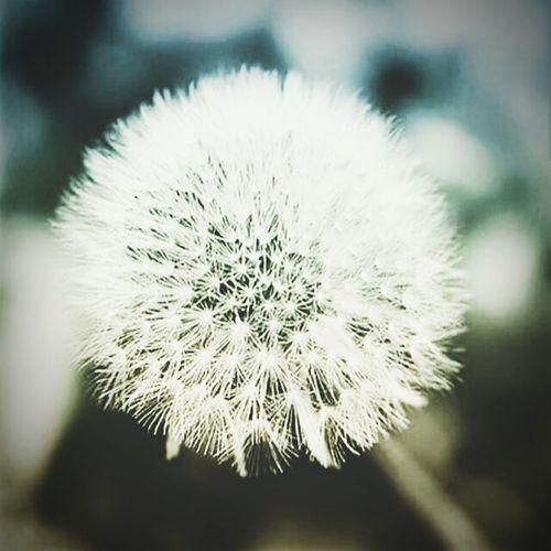 @flowers&life