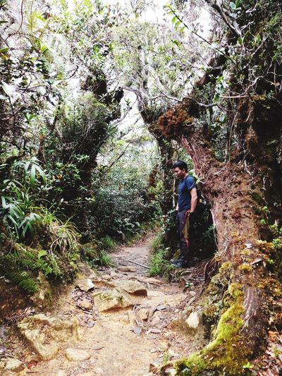 One With Nature Nature Beautiful Nature Naturelovers along Mesilau Trail