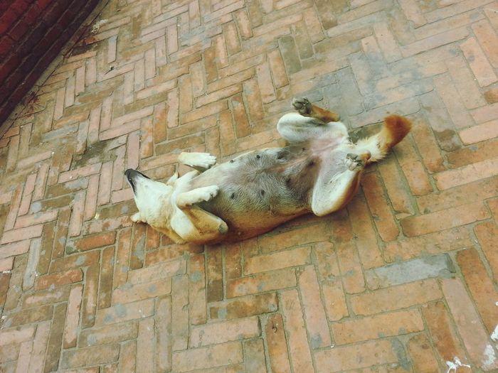 Doggy Dog❤ Sleeping Dog Dont Trust No Female Dog Cuz They Will Bite U Back