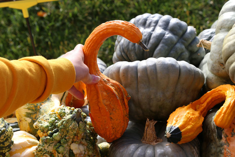 Close-up of hand holding pumpkins at market