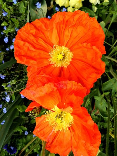 Flower Nature Flower Head Orange Color Petal Beauty In Nature Plant Outdoors No People Multi Colored Fragility