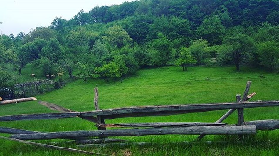 🌳🌿🍀🌳🌿🍀 Bulgaria Tryavna Green Nature Keepcalmandbreathe Calmness Beutyfullbulgaria Forests Vacations Travel Travelingram Lovelife