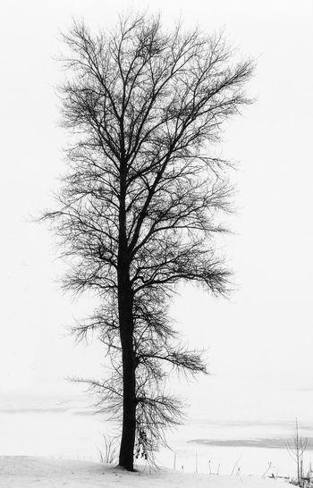 Lonely tree ...