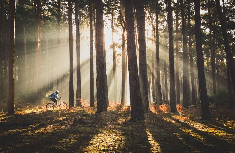Outdoors Sport Landscape Sunlight Light Nature WoodLand Trees Forest Cycle MTB Biking MTB Mountain Biking Fitness Outdoor On Your Bike EyeEm Best Shots EyeEm Nature Lover Eye4photography  EyeEm Best Shots - Nature Sunset_collection IPhoneography IPhone Photography IPhone