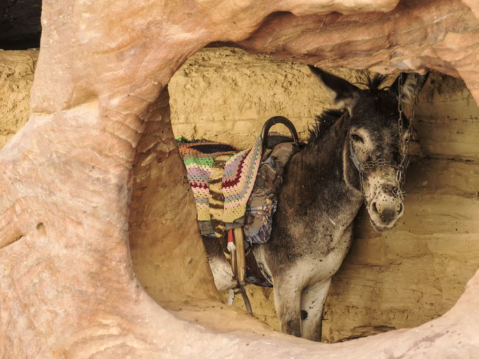 Petra June 2017 - donkey and flys #animal #animal Portrait #asino #beduin #cute #desert #desert Beauty #donkey #EyeEm #giordania #jordan #mosche #Mountain #olympus #omdem5markii #Petra #smell #travel #travelphotography #wild #wonderfulplace Animal Themes Day One Animal Outdoors