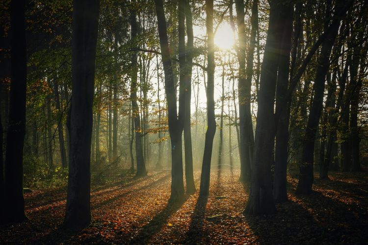 Nature Forest Light And Shadow Nature Photography Naturelovers EyeEm Gallery Streamzoofamily Darkness And Light Trees Nature_collection Nature_perfection Mist