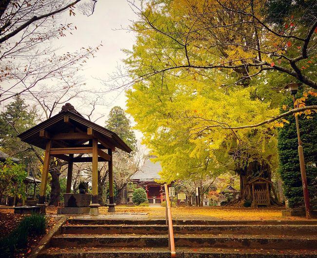 西蓮寺 茨城 Tree Autumn Autumn Leaves Autmn Colors 紅葉 Lifestyles Relaxation Relaxing Japan Photography Japan Photos Beauty In Nature 3XSPUnity Enjoying Life