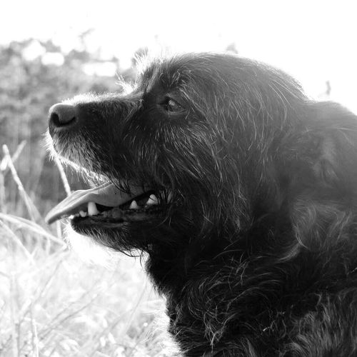 Dog One Animal Domestic Animals Animal Themes Mammal Outdoors Day No People Close-up Grass Nature Sky Tounge Out  Theeth Happy Blackandwhite Blackandwhite Photography Black And White Sunlight