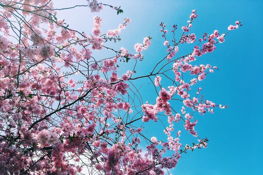 Low Angle View Sky Blue Nature Clear Sky Day No People Outdoors Beauty In Nature Mid-air Fragility Plant Vulnerability  Motion Branch Sunny Growth Sunlight Freshness Colored Background