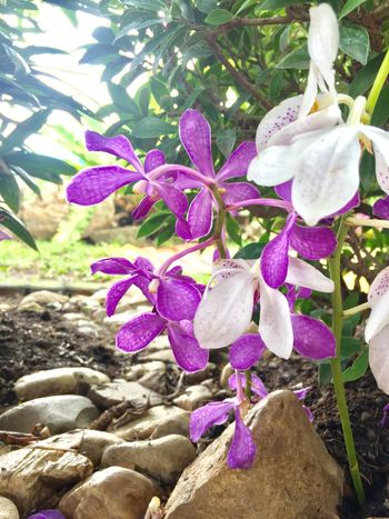 Nature Day Petal No People Growth Outdoors Beauty In Nature Flower Plant Close-up Fragility Freshness Flower Head Orchid Purple