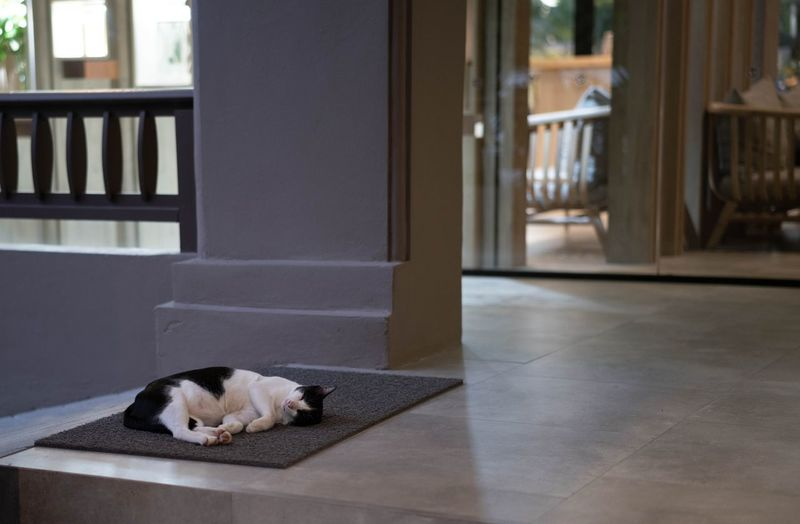 Cat relaxing on floor at home