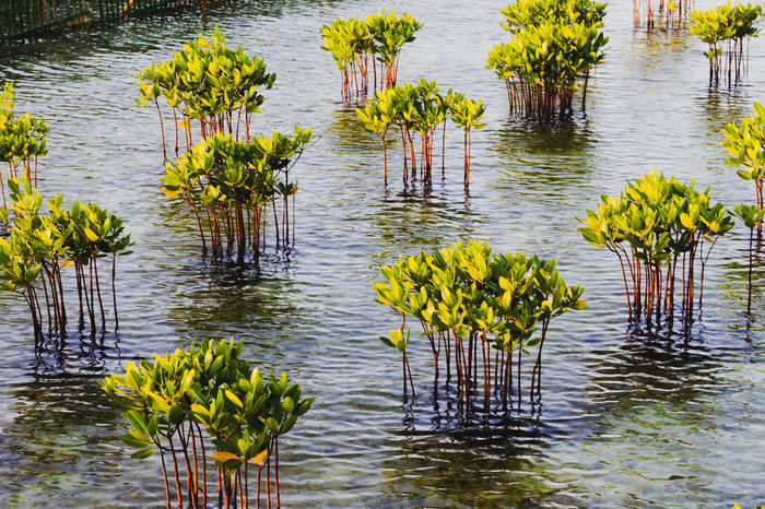 Water Reflection Lake Flood Nature Accidents And Disasters Outdoors No People Swamp Leaf Marsh Tree Day Beauty In Nature Mangrove Mangrove Life Endagered Species Danger Survival Plants Tree Nature INDONESIA Wood - Material