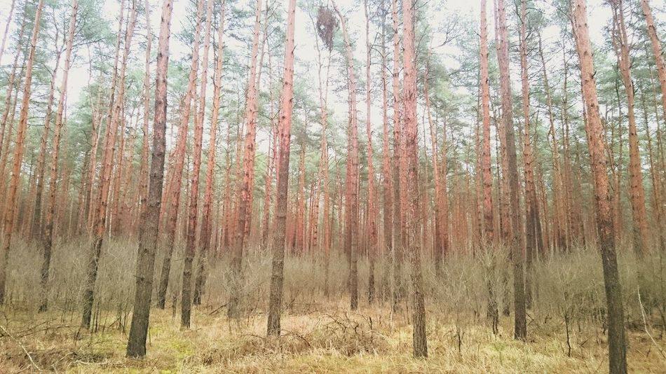 Tree Nature Growth No People Tranquility Forest Day Outdoors Beauty In Nature Brandenburg
