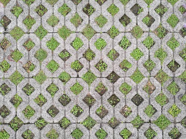 Pattern Outdoors Backgrounds Texture Tile Footpath Sidewalk Grass Green Walk Concrete Blocks Block Art Grey Design Decoration Abstract Architecture Rainy Season Bangkok Thailand