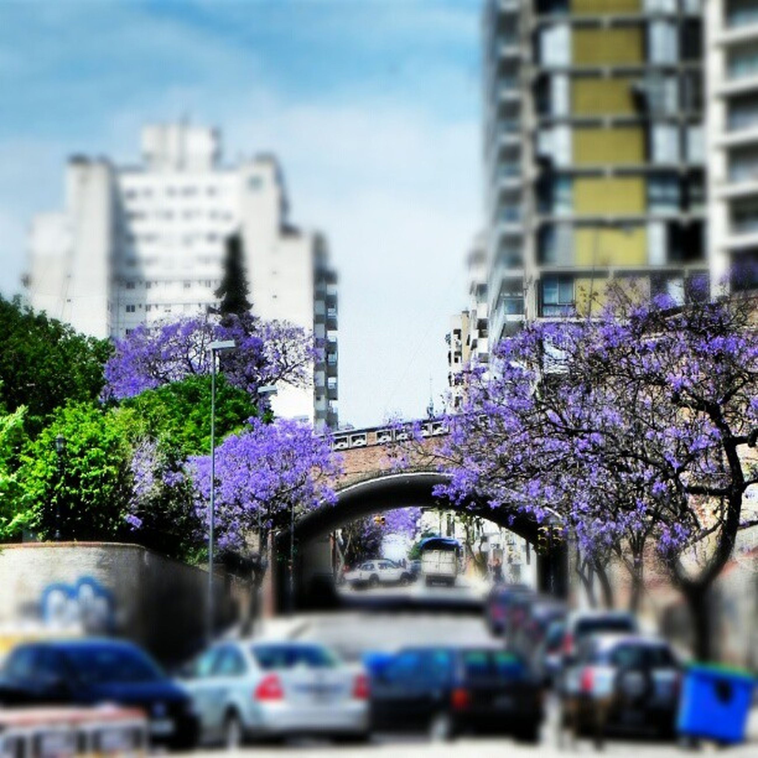 flower, building exterior, architecture, built structure, city, transportation, car, tree, land vehicle, growth, purple, mode of transport, fragility, focus on foreground, selective focus, freshness, day, outdoors, road, sky