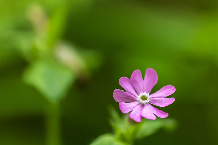 Beauty In Nature Blooming Close-up Day Delicate Environment Flower Fragility Freshness Growth Nature No People Outdoors Plant Tissue
