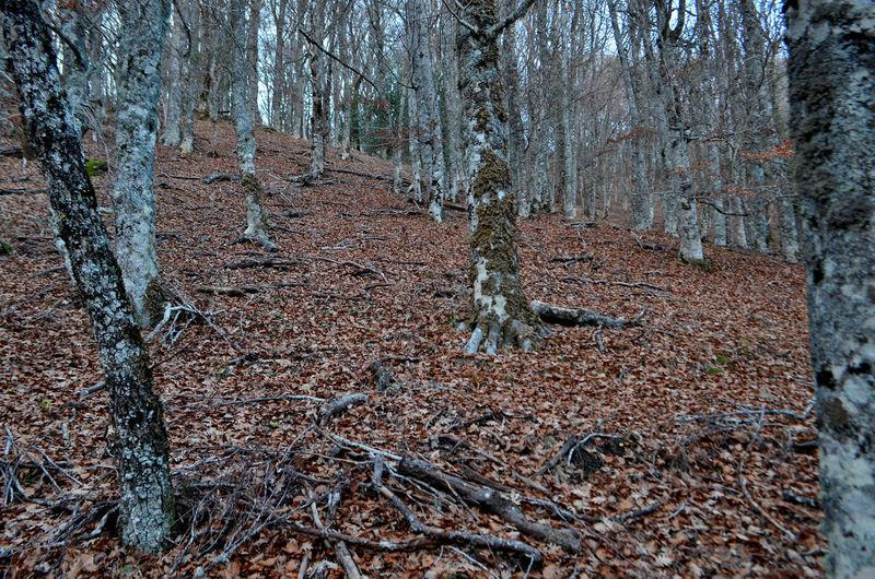Tree Land Plant