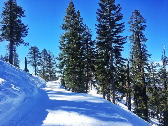 Tahoe Skiing Ski Trip Snow ❄