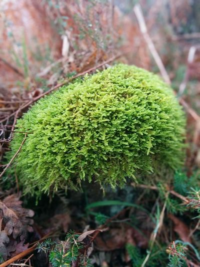 Moss in the forest Green Color Nature Growth Plant Outdoors Beauty In Nature Day Freshness Moss