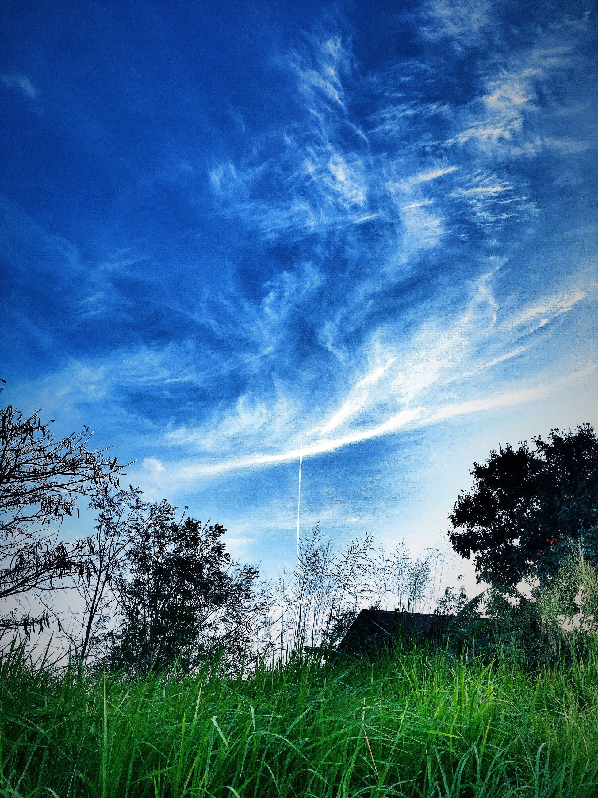 sky, growth, nature, scenics, beauty in nature, tranquility, no people, tree, outdoors, backgrounds, day, galaxy, astronomy