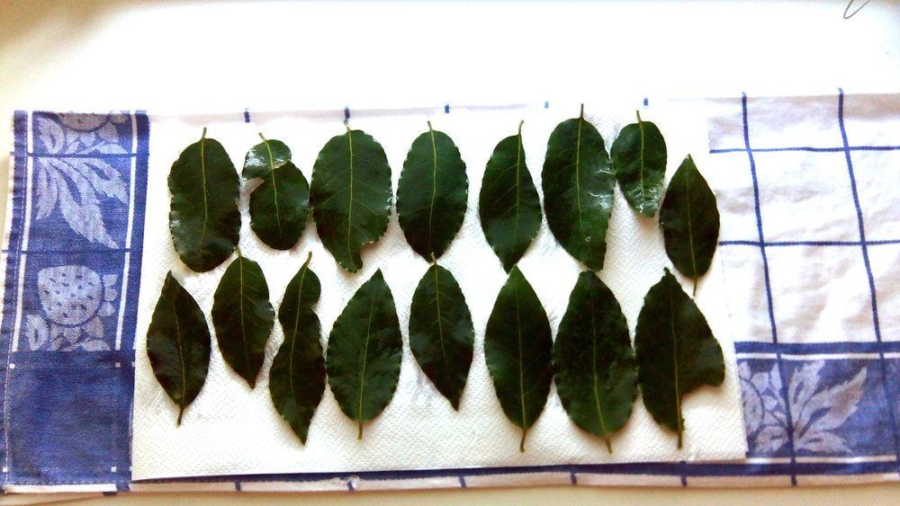 Leaves Foodobsession Feelslikehome