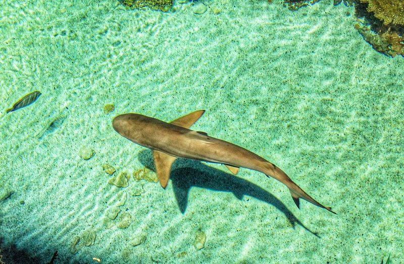 Shark Aquarium Fish Marine Life Green Green Green!  Nature On Your Doorstep Creative Light And Shadow