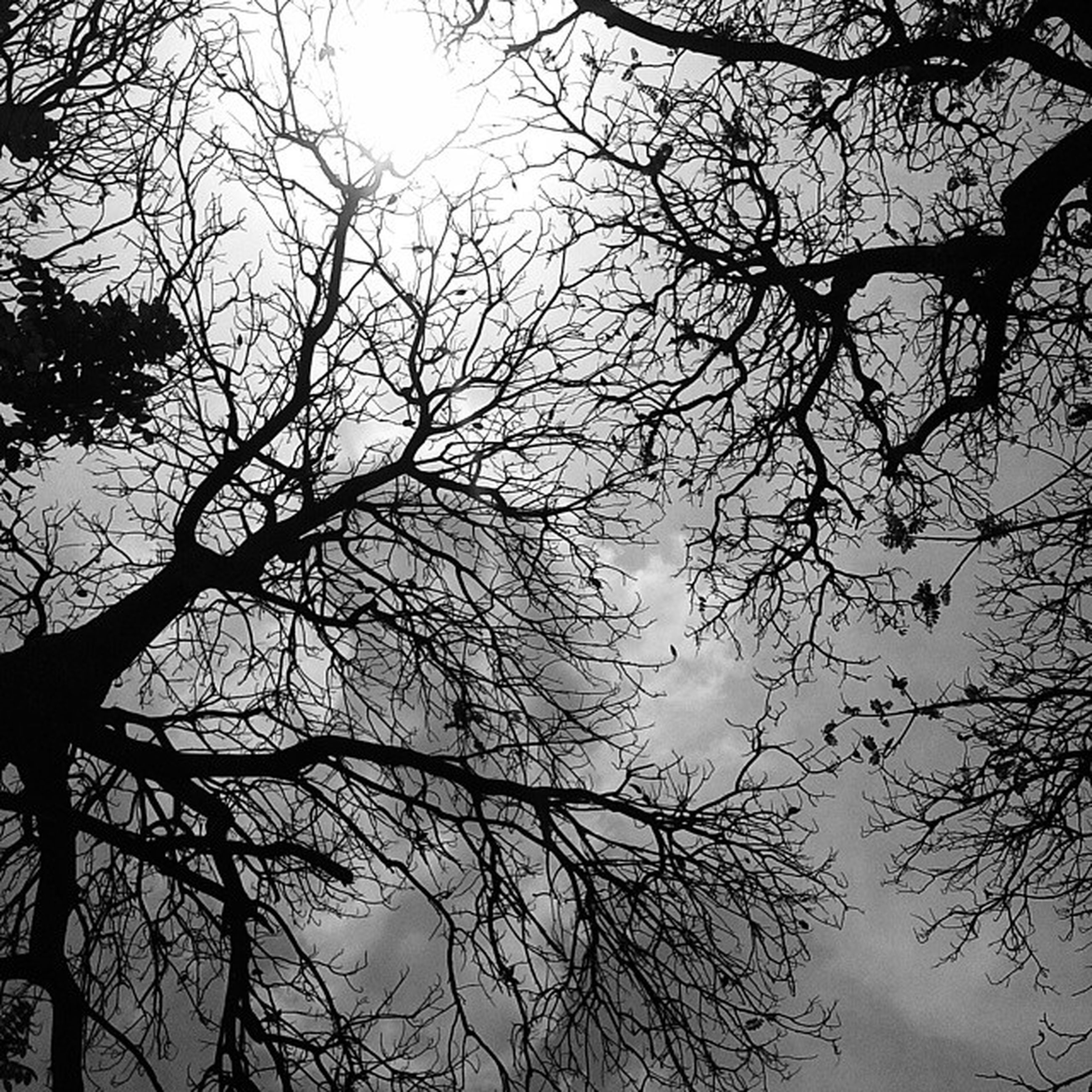 branch, bare tree, tree, low angle view, silhouette, tranquility, sky, nature, beauty in nature, scenics, tranquil scene, outdoors, growth, no people, dusk, tree trunk, day, sunset, cloud - sky, idyllic