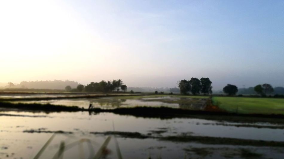 Paddy Field Earlymorning  Sunrise Morning Sun Sky Kampung Kampunghalaman Kampunglife Reflection Water Landscape Nature Lake Field Outdoors Tree Rural Scene Fog Agriculture No People Scenics Sky Beauty In Nature Rice Paddy Day Flood