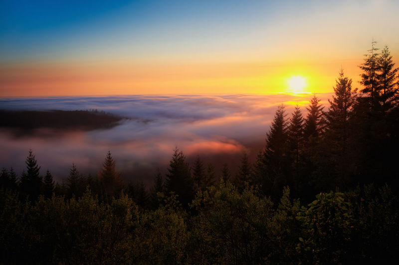 Scenic view of dramatic sky over forest during sunset