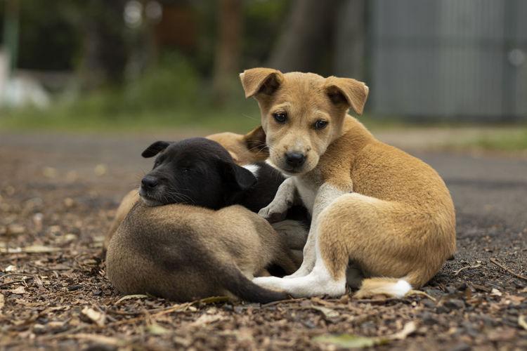 Dogs sitting on land