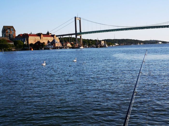My town No Edit/no Filter Huaweiphotography Leicacamera Sweden Summertime EyeEm Selects Docks Swans Water City Clear Sky Cityscape Suspension Bridge Bridge - Man Made Structure River Cable Rippled Sky Cable-stayed Bridge Engineering Fishing Tackle Calm Bridge Fishing Rod