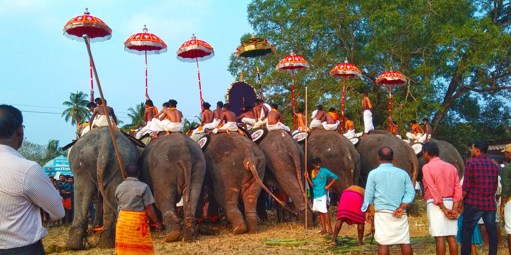 Pooram Kuttiyankavu elephants elephants men women festival Festival Season Colors Misc Miscellaneous  Elephants Elephants Men Women Festival Pooram Elephant Back Umbrella Umbrellas Umbrella Art Sunny Sun Sunlight Tree Adult Sky