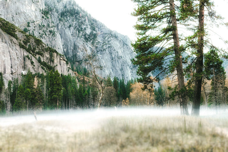 Fog along the Yosemite Valley Floor among stone peaks and Evergreens. Scenic mountain region comprising the Sierra Nevada Range & Yosemite Valley of the Merced river; famous for giant sequoias, huge rock domes & peaks. Beauty In Nature Day Fog Grass Grassland Growth Nature No People Outdoors Scenics Sky Tree Water Waterfall Yosemite Yosemite National Park Yosemite Valley
