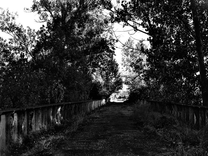 Bad Condition Country Nature Path Road Rural Welcome To Black Black And White Blackandwhite Environment Forest Forest Photography Landscape Nature Path In Nature Pathway Popplar Road Trip Rural Road Rural Scene The Way Forward Trail Tree Way Ways