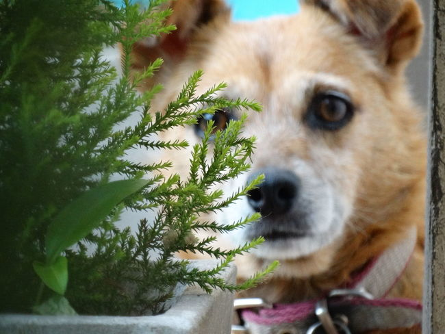 Dog Pets One Animal Domestic Animals Animal Themes Mammal Looking At Camera Portrait Close-up No People Day Tree Outdoors Nature