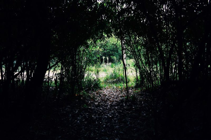 Tree Forest Nature No People Tranquility Day Outdoors Growth Beauty In Nature Scenics The Great Outdoors - 2017 EyeEm Awards Breathing Space The Week On EyeEm Lost In The Landscape The Great Outdoors - 2018 EyeEm Awards A New Perspective On Life My Best Photo